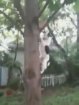 perro collie trepando arbol