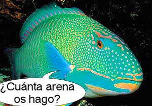 pez-loro-arena-playas