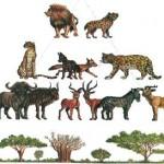 trofica-cadena-alimentaria-animales-plantas