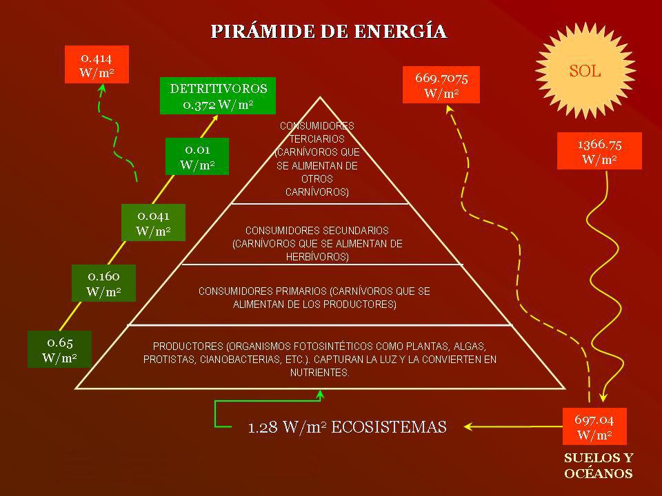 trofico-cadena-alimenticia-piramide_energia
