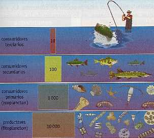troficos-niveles-energia-ecosistema