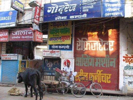vacas-india-cows-holy-sagradas-calles
