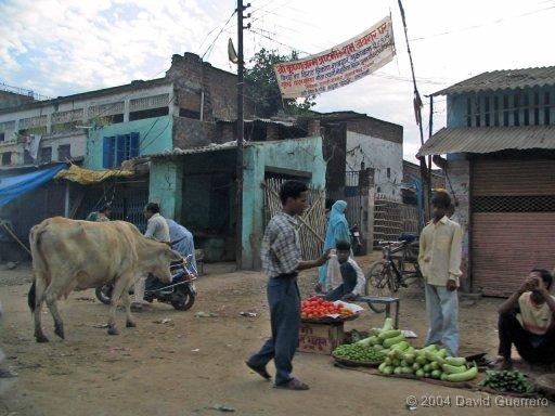 vacas-india-cows-holy-sagradas-peta