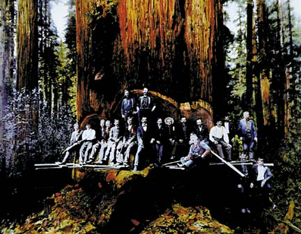 Lindsay Creek 1897 sequoia