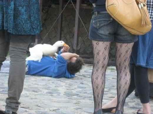 animales-atacando