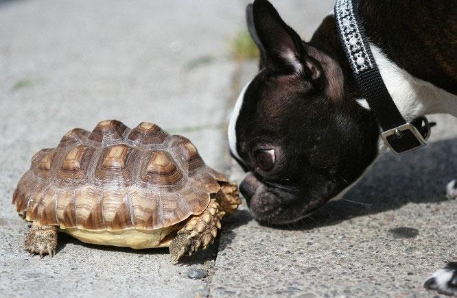 animales-divertidos-perro-tortuga