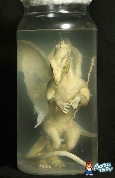 atrocidades-formol-dragon