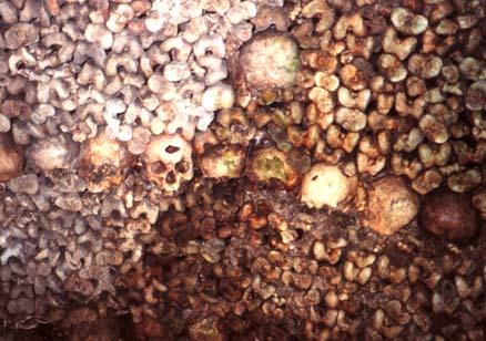 catacumbas paris catacombes pared osea