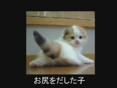 fotos gatos graciosas 1