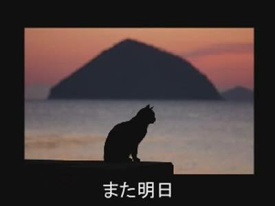 fotos gatos graciosas 2
