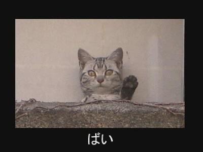 fotos gatos graciosas 3