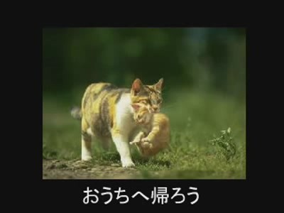 fotos gatos graciosas 4