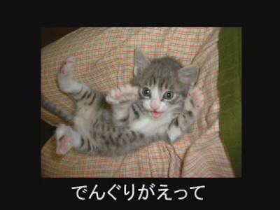 fotos gatos graciosas 5