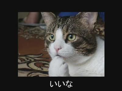 fotos gatos graciosas 6