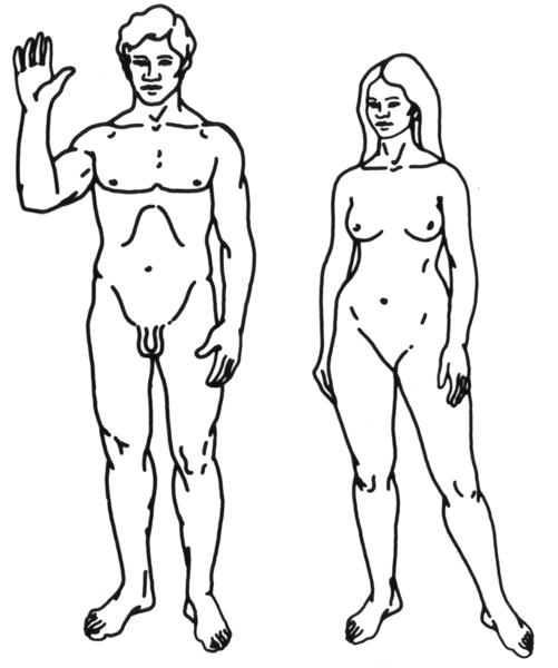 humanos-hombre-mujer-estradiol-testosterona