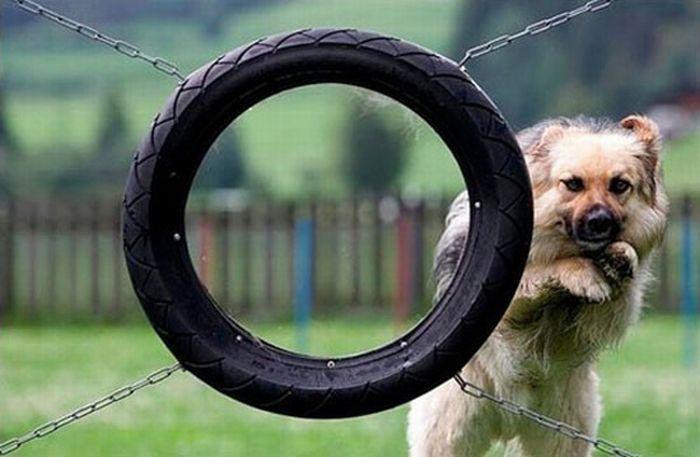 imagenes-divertidas-perros