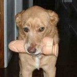 Imágenes graciosas de perros