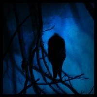 miedo-oscuridad-oscuro-cuervo