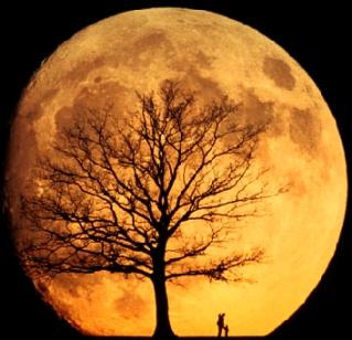 naranja-luna-anaranjada-orange-moon