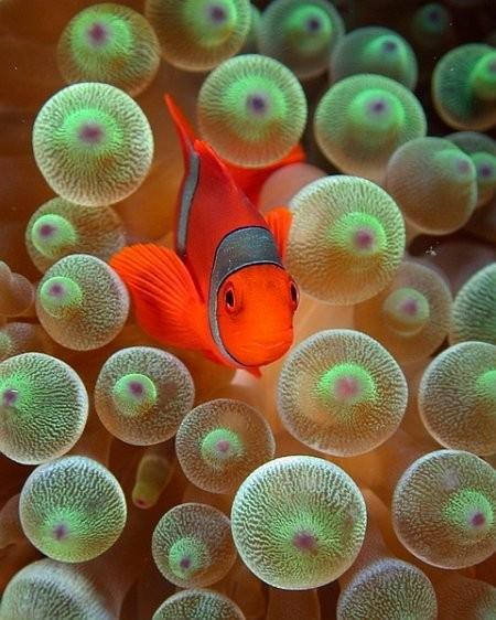 naturaleza-bella-pez