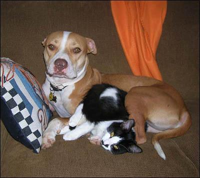 perros-gatos-cat-dogs-1