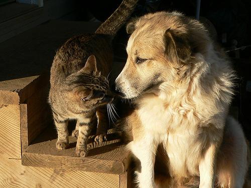 perros-gatos-cat-dogs-2