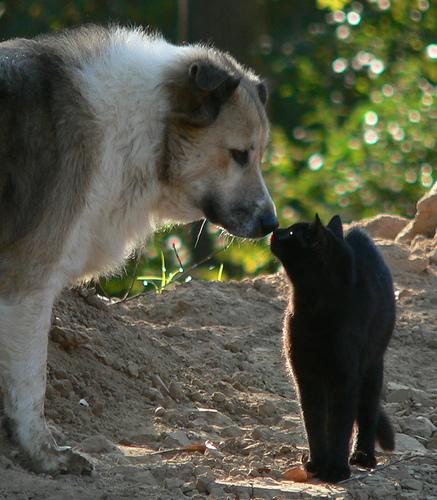 perros-gatos-cat-dogs-3