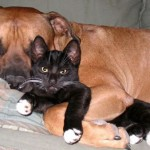 perros-gatos-cat-dogs-6