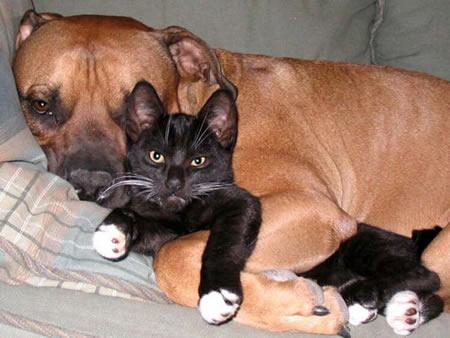 perros-gatos-cat-dogs-6
