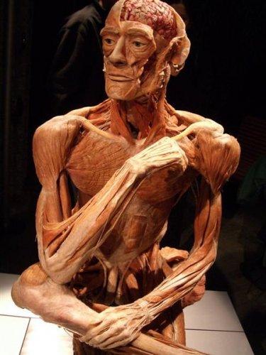 plastinacion-cuerpo-humano-figura