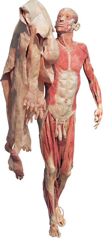 plastinacion-cuerpos-disecados