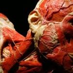 plastinacion-cuerpos-disecados-09