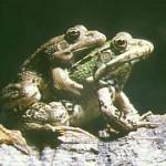 Reproducción y desarrollo animal