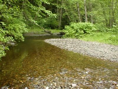 rio bosque