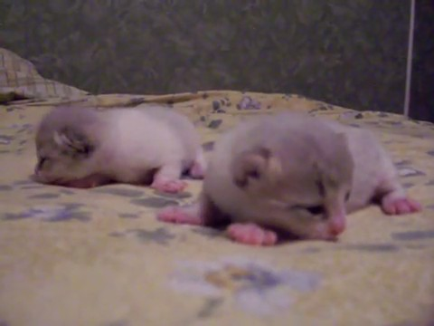 video gatitos recien nacidos