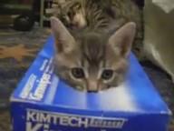 videos gatitos jugando