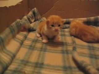 videos gatitos pequenos
