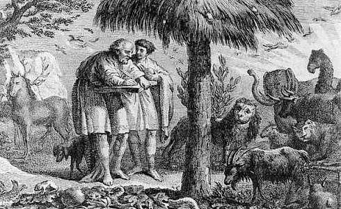 aristoteles ovejas