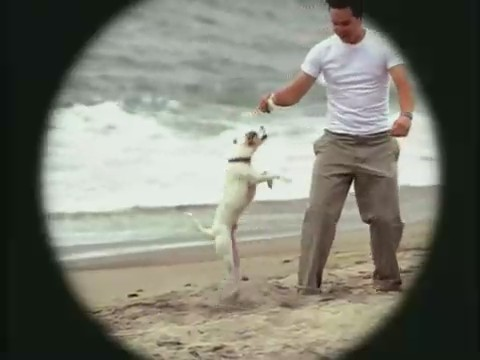 blink-182-all-the-small-things-video
