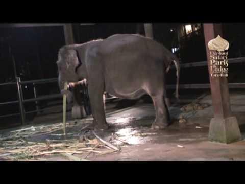 elephant-birth-nicky-riski