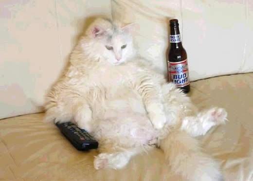 gatos-graciosos-divertidos-risas-gato-gracioso-risa