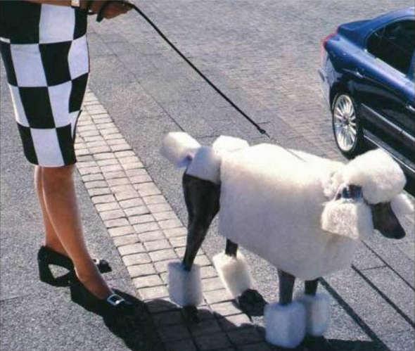imagenes-graciosas-perrito-pijo