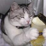 imagenes-risa-gato-divertidas-7