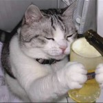 Videomontajes de gatos