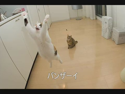 imagenes-risa-gato-divertidas
