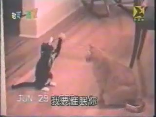 judo karate video humor gatos