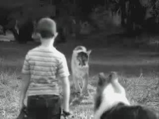 lassie kung fu video humor