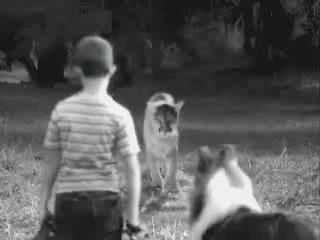 lassie kung fu video humor