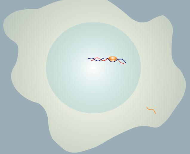 luciernaga luz mARN celula