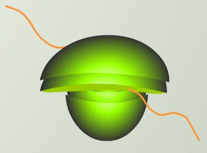 luciernaga luz mARN luc gen ribosoma 2